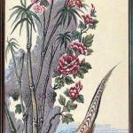 bambuk-i-roza-143207-40h113