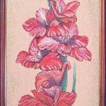 gladiolus-140260-33h88